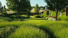 A large garden in the pastures of Salamanca : Urquijo-Kastner Landscape Architecture, Landscape Design, Garden Design, Garden Pool, Garden Landscaping, Beautiful Landscapes, Beautiful Gardens, Provence, Farmhouse Garden