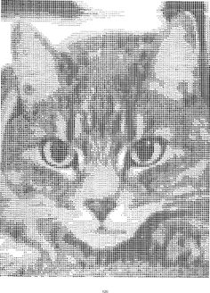 ASCII art cat