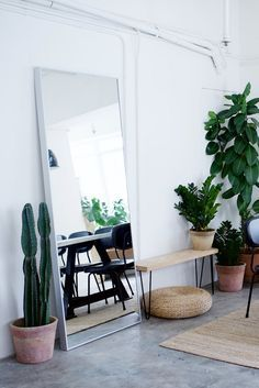 open space mirror and cacti