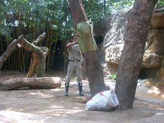 Nuestro equipo esconde la carne bajo mantas camufladas del mismo color de los árboles.