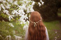 Gingerlillytea