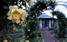 Thornden Park