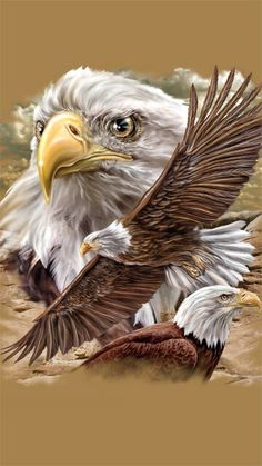 justlittlememory - 0 results for animals Eagle Images, Eagle Pictures, Native American Pictures, Native American Art, Eagle Artwork, Aigle Animal, Types Of Eagles, Eagle Wallpaper, Vogel Tattoo