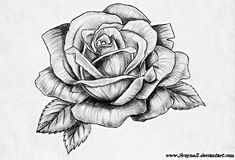Rose Drawing Discover Explore Melanie Robertss photos on Photobucket. Rose Drawing Tattoo, Flower Art Drawing, Floral Drawing, Tattoo Drawings, Rose Tattoos, Flower Tattoos, Body Art Tattoos, Sleeve Tattoos, Daddy Tattoos