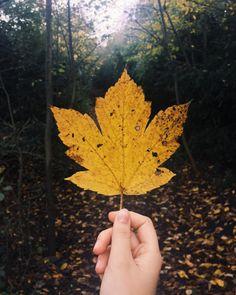 cladelcroix:  Love fall  #autumn #fall #leaves #instaautumn...