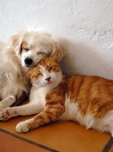 dog-cat-cuddling-