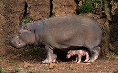 mãe e filhote