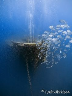 Thistlegorm wreck - Red Sea by Carlos Martinez.