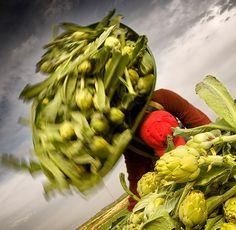 Tudela. 8 razones con fundamento para visitarla.  La alcachofa de Tudela es uno de los regalos gastronómicos de la huerta de Tudela. Turismo de Navarra.