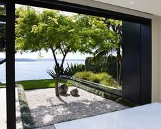 Gleditsia feature tree, Kirribilli project. Featuring Popov Bass Architects
