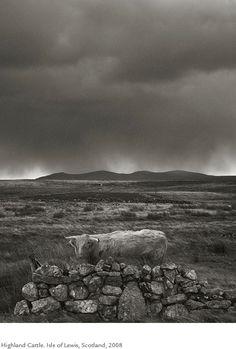 Kristoffer Albrecht, Highland Cattle. Isle of Lewis, Scotland, 2008