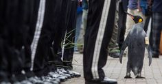 THE penguin was given a new title by Norway's army and inspected the Royal Guard at a ceremony in Edinburgh.