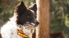 Dog owners in Charlotte will get a kick out of these fun area dog parks.