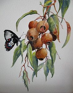 Gumnut Painting - Australian Natives by Helen Miles Australian Wildflowers, Australian Native Flowers, Leaf Drawing, Plant Drawing, Australian Painters, Australian Art, Plant Painting, Plant Art, Botanical Drawings