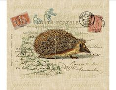 Hedgehog Paris Carte Postale Digital download image by graphicals