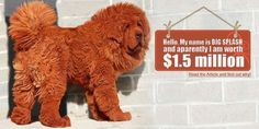 Worlds Most Expensive Dog: Tibetan Mastiff - EALUXE.COM