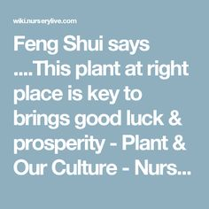 Feng Shui says ....This plant at right place is key to brings good luck & prosperity - Plant & Our Culture - NurseryLive Wikipedia