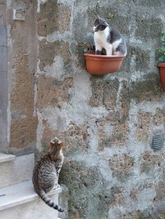 Romeo and Juliet cats Just stopping to say ciao and asking how. In Pitigliano, Tuscany Italy. | Flickr - Photo Sharing!