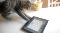 Waffles plays on iPad