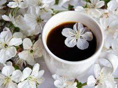 Cerisiers et café ...