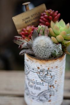 Succulents in can