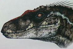 Male Velociraptor from Jurassic Park 3.