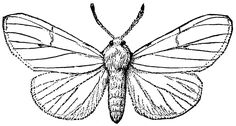 Black And White Moth Drawing Pictures to Pin on Pinterest - PinsDaddy