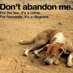Please if you think anyone may harm their dog - get them to some agency that might help the animal! Lets' all stand together against dog abuse....