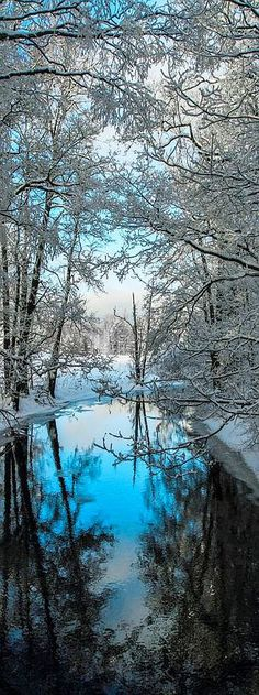 WINTER WONDERLAND REFLECTION  #snow lake river creek tree nature landscape reflection blue white #by Lauri Lohi -  http://emmabeatrice22.tumblr.com/post/154282772054/winterday-by-lauri-lohi
