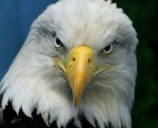 Eagle Symbolism... Timing, Freedom, Expansion of Spirit and more www.UniveseofSymbolism.com