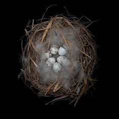 Красота природы: птичьи гнезда | Art and Soul Project