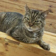 Meet Big Head the Barn Cat