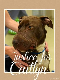 Recovering Dog Whose Mouth Was Taped Shut Inspires An Entire Community by Phil Mutz | Caitlyn the dog profile picture