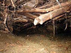 Inside a beavers dam - photo#38