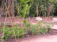 A simple and natural way to support your tomato plants… Tomato Support, Tomato Cages, Plant Supports, Tomato Plants, Garden Trellis, Growing Flowers, Outdoor Projects, Amazing Gardens