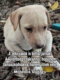 Animal Templates, Baby Animals Pictures, Emoji, Labrador Retriever, Life Hacks, Dogs, Quotes, Touch, Animal Pictures