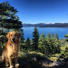 Spring is all about hitting the trails of Tahoe North with our best friends. (Photo: willladelph).