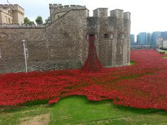 Blood Swept Lands and Seas of Red - Greater London - I'f you're quick, you can perhaps still see some of the ceramic poppies, symbolizing all the deaths during the first World War (they will be 'picked' and sold)