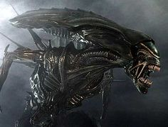 The Xenomorph from Alien/Aliens