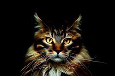 Animal portrait - A. Dellatorre