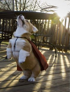 I must go, my planet needs me.   ...........click here to find out more     http://googydog.com