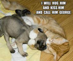 Funny puppy meme. Love the Harry Potter reference | Jaxon ...
