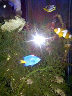 Dori and Nemo