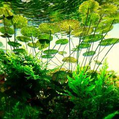 How to Create Self Watering Planters? Tropical Fish Aquarium, Live Aquarium Plants, Home Aquarium, Nature Aquarium, Aquarium Fish Tank, Planted Aquarium, Live Plants, Aquarium Terrarium, Aquarium Aquascape