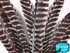 Turkey Feathers - Natural Barred Wild Turkey Quill Feathers - 6 Pieces Moonlight Feather http://www.amazon.com/dp/B00HNY8D0A/ref=cm_sw_r_pi_dp_5Og.wb0HJC4TW
