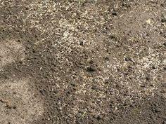 Cómo construir el semillero climatizado más barato