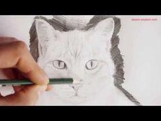 Vidéo : comment dessiner un portrait de chat (Tuto Episode 3) par Léo Dessin - l'Atelier Géant