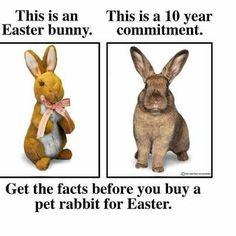 house rabbits - Google Search
