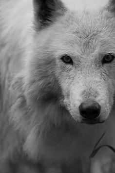 W = Wolf