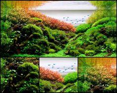 """""""Unknown way"""" de Leandro Artioli - vencedor do AGA 2012 categoria 28 ~ 60l   mais info: http://showcase.aquatic-gardeners.org/2012/show377.html"""